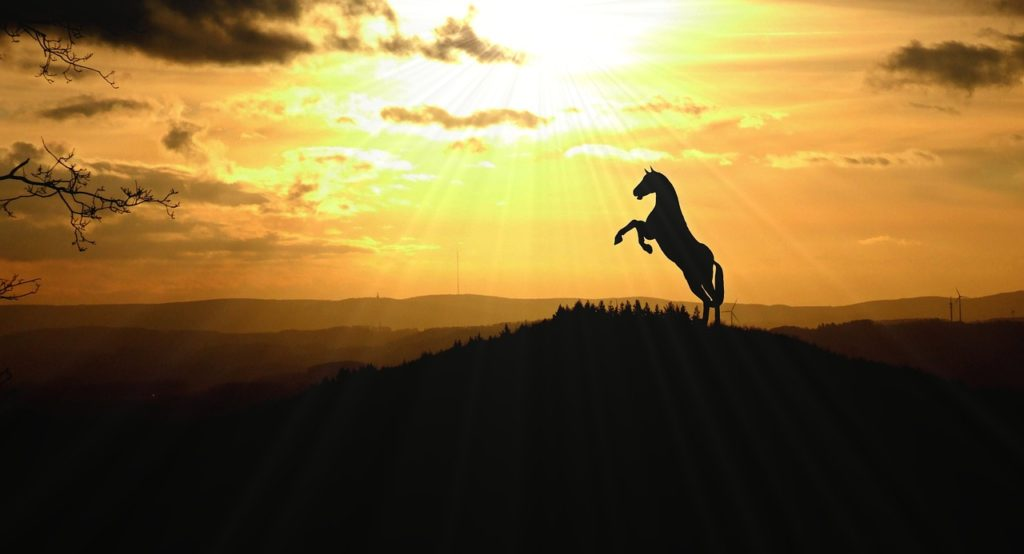 Seelentier-pferd-staerke-und-kraft
