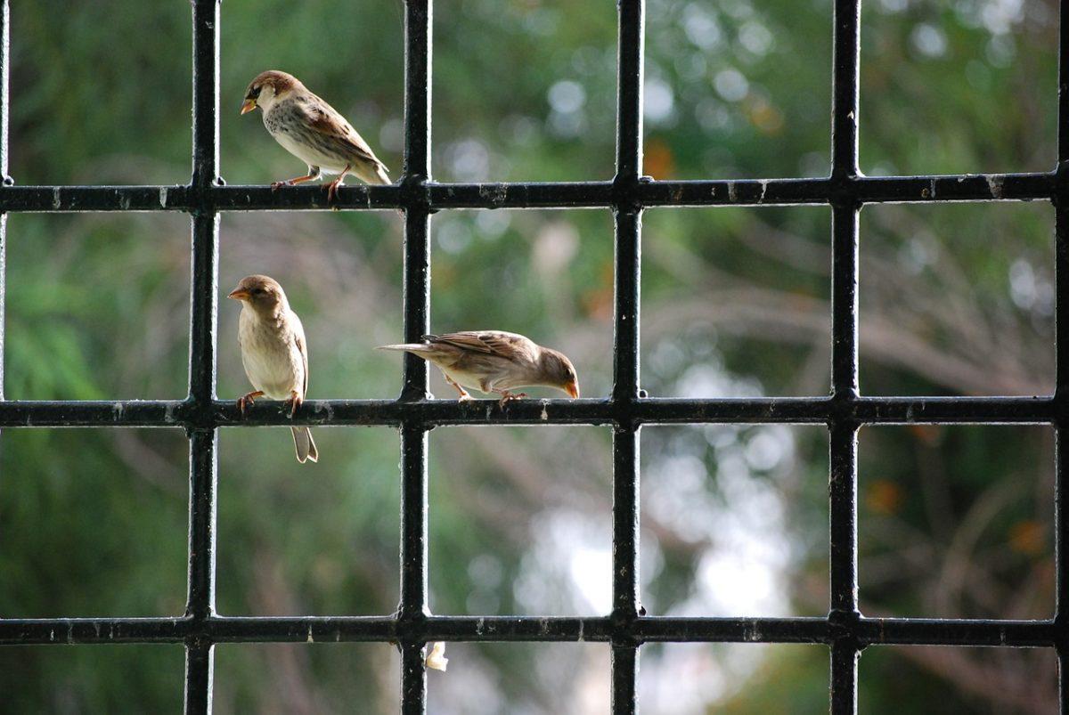 vogel-fliegt-gegen-fenster-bedeutung